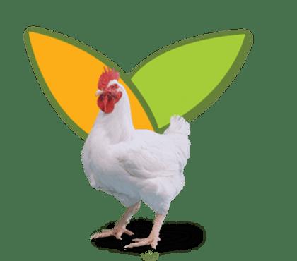 Aliments Composès Poulet de Chair