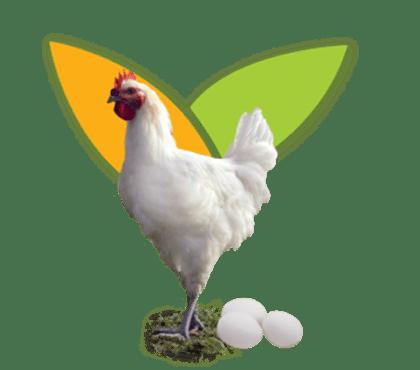 Aliments Composès Poulette et Pondeuse