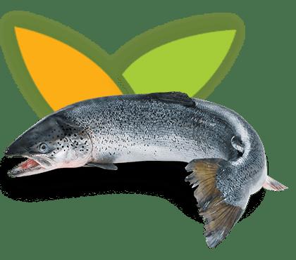 CMV Aquaculture