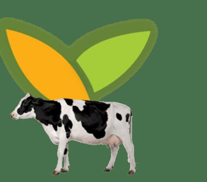 CMV Vache laitière